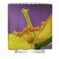 St Johns Wort Flower Shower Curtain