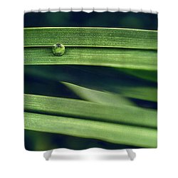 Stacked Shower Curtain