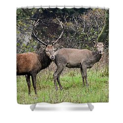 Stag And Doe  Shower Curtain