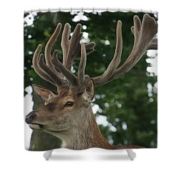 Stag Head. Shower Curtain