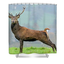 Stag Shower Curtain
