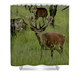 Stag Of The Herd. Shower Curtain