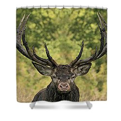 Stag Panorama Shower Curtain
