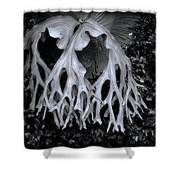 Shower Curtain featuring the photograph Staghorn Fern by Wayne Sherriff