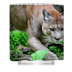 Stalking Shower Curtain