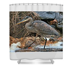 Stalking Heron Shower Curtain by Debbie Stahre