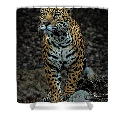 Stalking Shower Curtain by Phil Abrams
