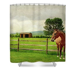 Shower Curtain featuring the photograph Stallion At Fence by Diana Angstadt