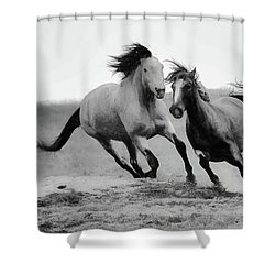 Shower Curtain featuring the photograph Stallion  by Kelly Marquardt