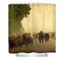 Stampede Shower Curtain by Teresa Zieba