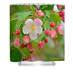 Stand Alone Japanese Cherry Blossom Shower Curtain