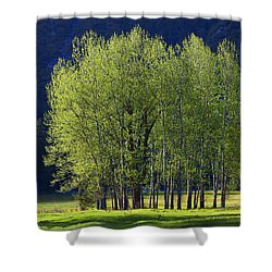 Stand Of Trees Yosemite Valley Shower Curtain by Garry Gay