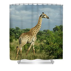 Standing Alone - Giraffe Shower Curtain