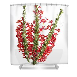 Standing-cypress Shower Curtain
