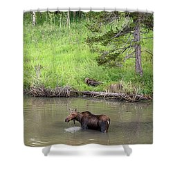 Shower Curtain featuring the photograph Standing Guard by James BO Insogna