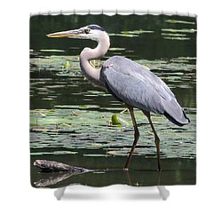 Shower Curtain featuring the photograph Standing Guard by Anita Oakley