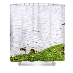 Shower Curtain featuring the photograph Standing Guard by Onyonet  Photo Studios