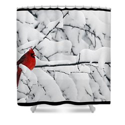Standing Out Shower Curtain by Shari Jardina