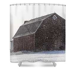 Standing Tall In The Snow Shower Curtain