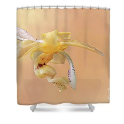 Stanhopea Orchid V2 Shower Curtain