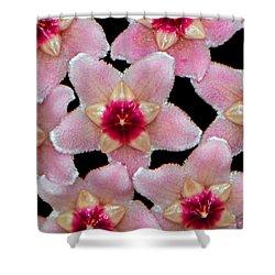 Stapelia Hirsuta - Starfish Flower 002 Shower Curtain by George Bostian