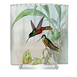 Star Fronted Hummingbird Shower Curtain by John Gould