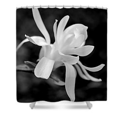 Star Magnolia Flower Black And White Shower Curtain