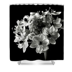 Star Of Bethlehem In Black And White Shower Curtain