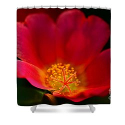 Star Of The Show Shower Curtain