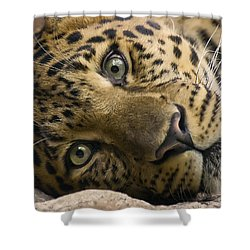 Shower Curtain featuring the photograph Stare Down by Cheri McEachin