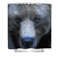 Stare Down Shower Curtain