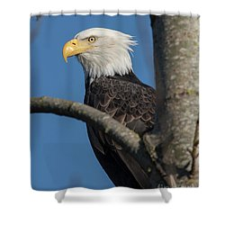 Staredown By Eagle  Shower Curtain