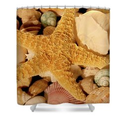 Shower Curtain featuring the photograph Starfish And Seashells by Angie Tirado