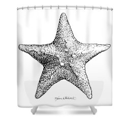 Shower Curtain featuring the drawing Starfish Drawing Black And White Sea Star by Karen Whitworth
