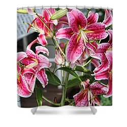 Stargazer Shower Curtain by Denise Romano