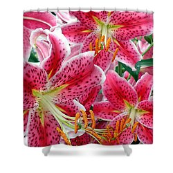 Stargazer Lilies Shower Curtain