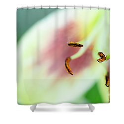 Stargazer Lily Shower Curtain by Marlo Horne