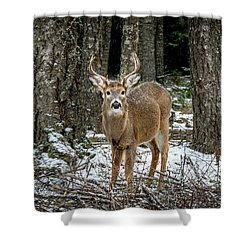 Staring Buck Shower Curtain