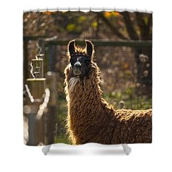 Staring Llama Shower Curtain