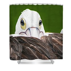 Shower Curtain featuring the digital art Staring Pelican by Ray Shiu