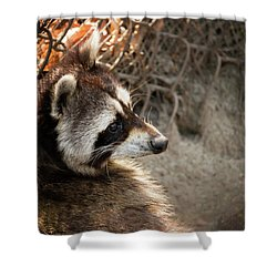Staring Raccooon Shower Curtain