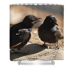 Starling Discussion. Shower Curtain