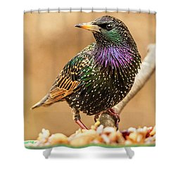 Starling In Glorious Color Shower Curtain