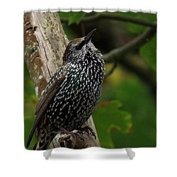 Starling Pride Shower Curtain