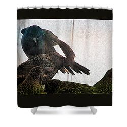 Starlings And The Grackle Shower Curtain by Ericamaxine Price