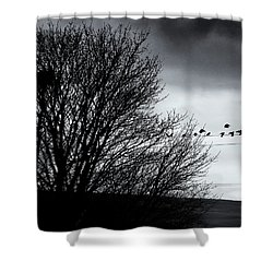 Starlings Roost Shower Curtain by Philip Openshaw