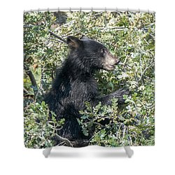 Startled Black Bear Cub Shower Curtain