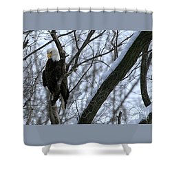 Starved Rock Eagle Shower Curtain