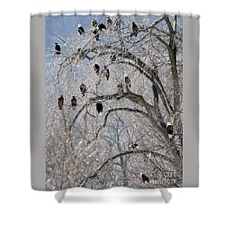 Starved Rock Eagles Shower Curtain