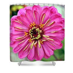 State Fair Zinnia Shower Curtain
